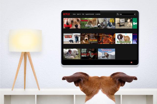 Cane-che-guarda-Netflix